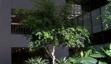 Slideshow_big_augusta-atrium-website-620x360