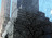 Building with office space for rent at 80 Pine Street, New York, NY